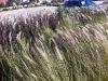 laughton-august-2011001057