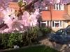 laughton-march-2011 (3) (640x478)