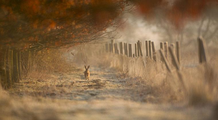 sirbobalot-countryside-photos-201103